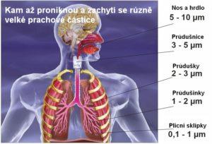 plíce adýchací cesty spřehledem, kam se při dýchání dostane jemný prach