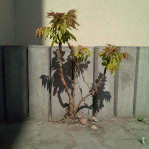 Stromeček vbetonu