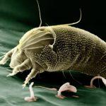 roztoč dělá alergeny vposteli