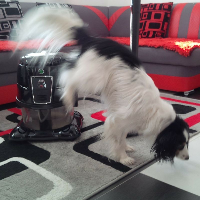 nejlepší vysavač na psí chlupy je hyla