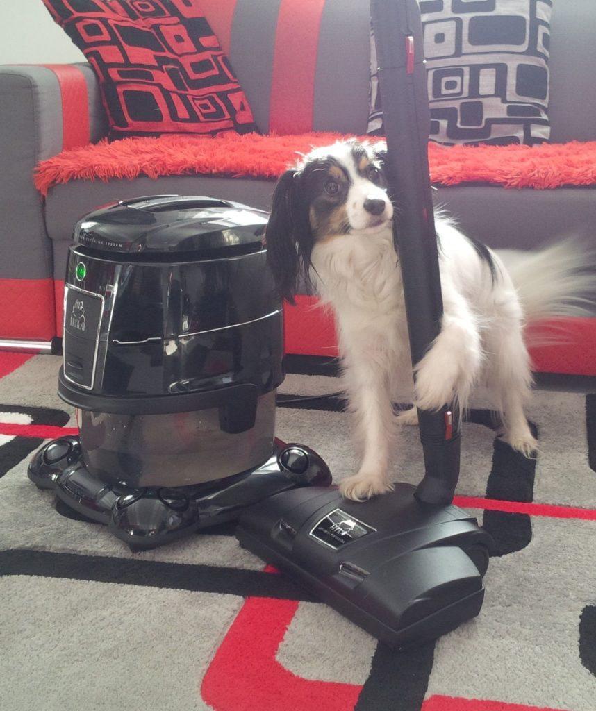 pes amy drží elektrický klepač hyla najejí chlupy zkoberce