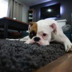 Jak vyčistíte shaggy koberec, aby krásně vypadal? Vezměte ho Hylou.