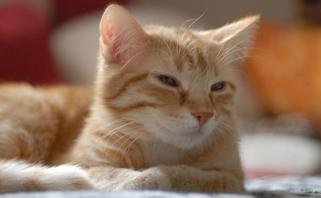 Máte doma kočku?