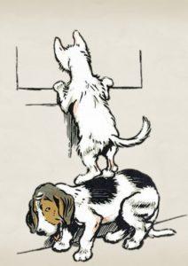 Pes kočka přenášejí koronavirus ? kočka kouká zokna, pes drží