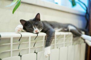 Kočka spí načistém radiátoru hyla